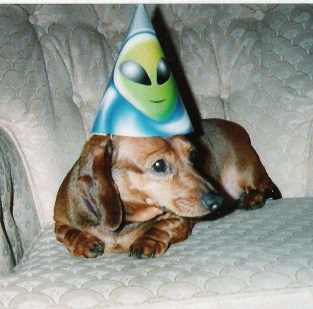 birthday_daschound.jpg